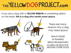 yellowdogproject-300x224
